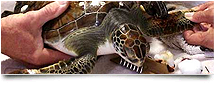 Sea Turtle Lighting Resources And Contacts